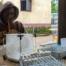 Les entomologistes de l'Institut Pasteur de Bangui recommandent au Programme National de Lutte contre le Paludisme (PNLP) et autres partenaires, d'élaborer des stratégies de lutte adaptées au contexte local, après avoir dressé un état des lieux dans la partie sud-ouest de la RCA, comprenant la mise à jour de l'inventaire des espèces d'Anophèles et des études appropriées sur la résistance de ces vecteurs aux insecticides.