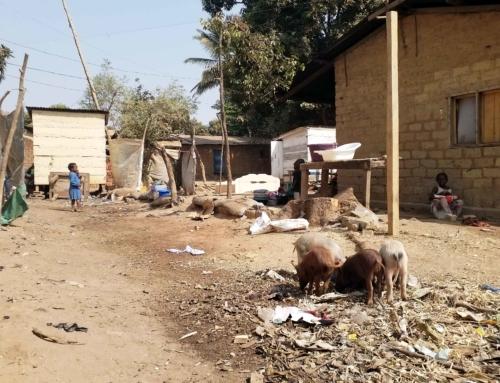10 février 2019 – Mieux comprendre la dissémination des rotavirus en République Centrafricaine par le projet GENVARO