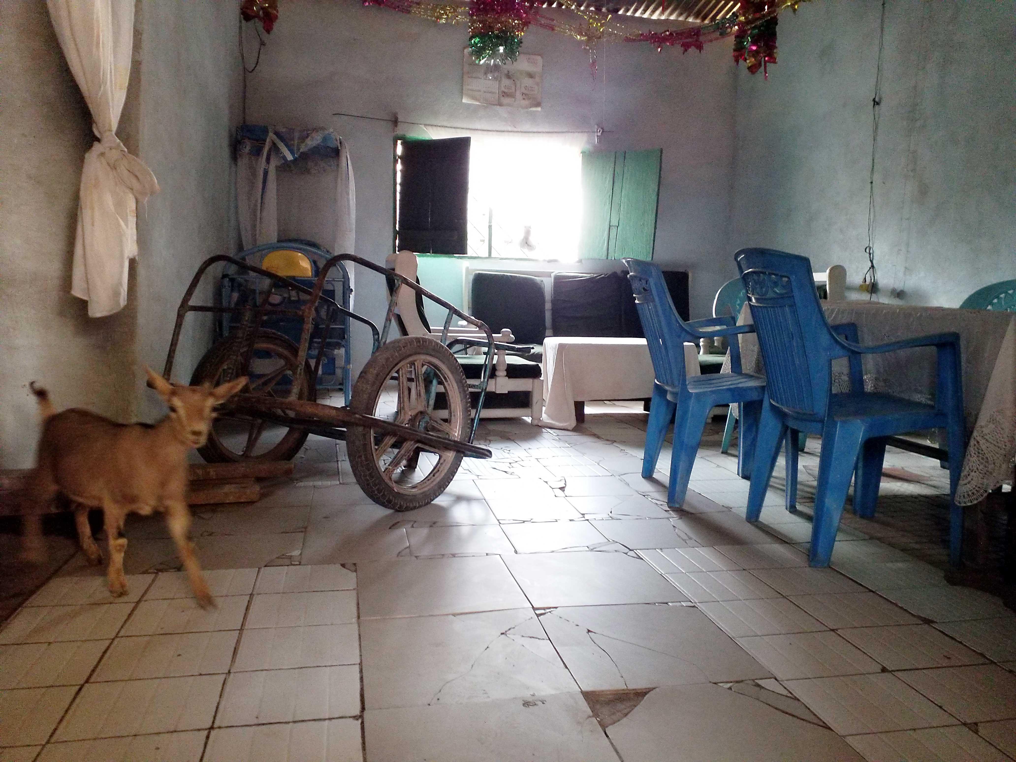 L'Institut Pasteur de Bangui, à travers le projet GENVARO, suit l'évolution de la distribution des génotypes de rotavirus chez les enfants de moins de 5 ans afin de caractériser les souches inhabituelles et déceler d'éventuelles souches émergentes. Ce projet au concept One health, mené en collaboration avec le Ministère de l'élevage, et le Complexe Pédiatrique de Bangui vise à contribuer efficacement au programme de lutte contre les diarrhées dues aux rotavirus.